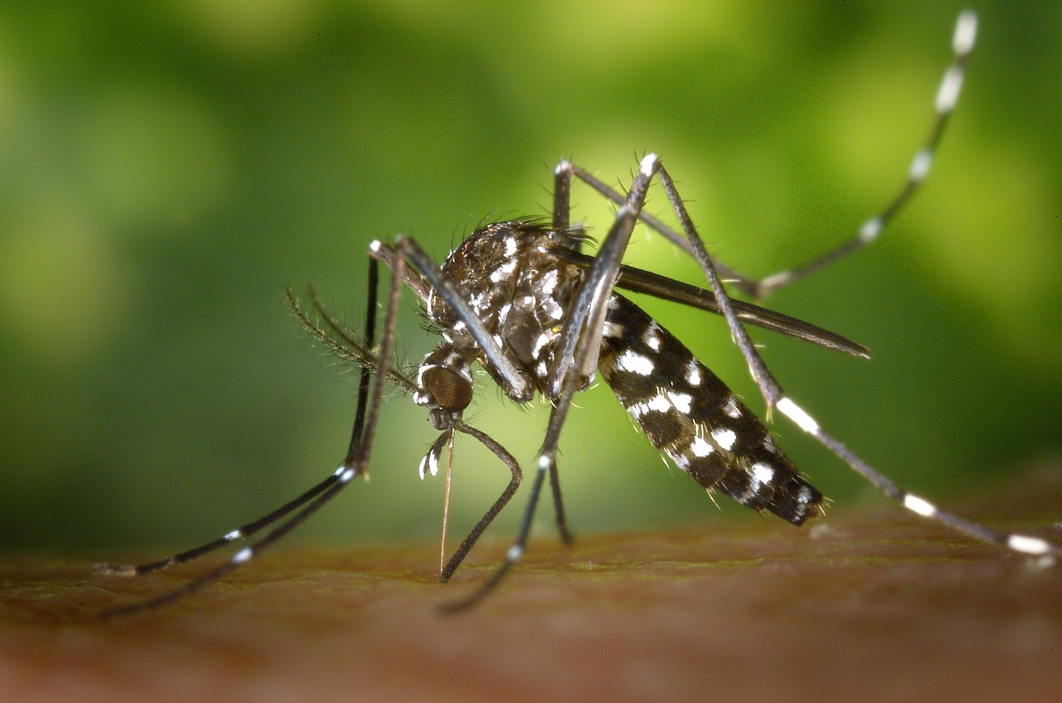 It's National Mosquito Control Awareness Week